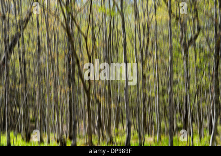 Blurry trees near Black River Harbor Falls in Bessemer, Michigan - Stock Photo