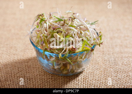 Mix of fresh plant sprouts growing in glass bowl - Stock Photo