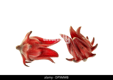 Roselle isolated on the white background - Stock Photo