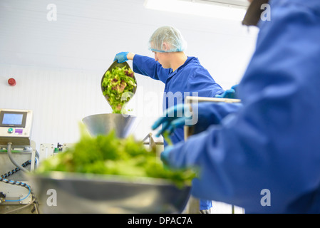 Workers weighing mixed salad leaves - Stock Photo