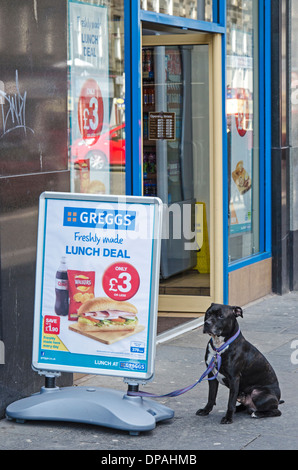 A Staffordshire Bull Terrier tethered to a sign outside a branch of Greggs the Baker in Edinburgh, Scotland, UK. - Stock Photo