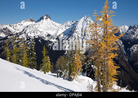 Fall color on larch trees in North Cascades after an early winter snow storm from Maple Pass Trail in Okanogan National - Stock Photo