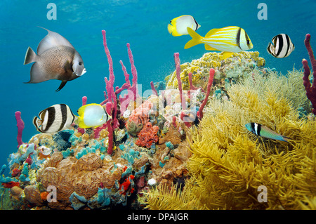 Colored underwater marine life in a coral reef with tropical fish, Caribbean sea - Stock Photo