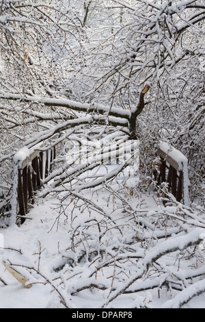 Fallen and broken trees crashed onto a bridge on a forest path along the Humber river after the 2013 ice storm Toronto - Stock Photo