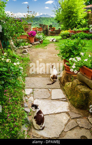 Cats in ancient garden, Italy - Stock Photo