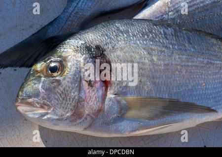 Fresh mediterranean sea-bream fish for sale on market of Marseilles, France - Stock Photo