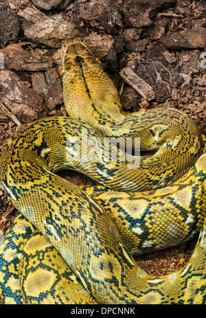 Snake creeps on the earth. Close up - Stock Photo