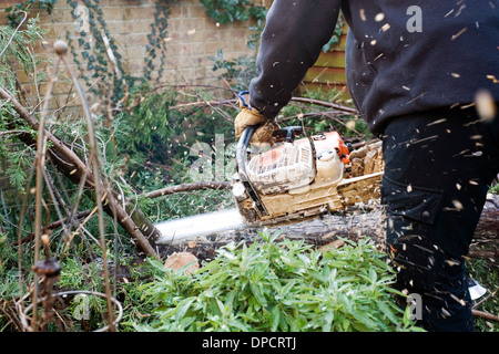 tree surgeon with chain saw cutting up tree in garden after being felled by high winds in winter storms england - Stock Photo