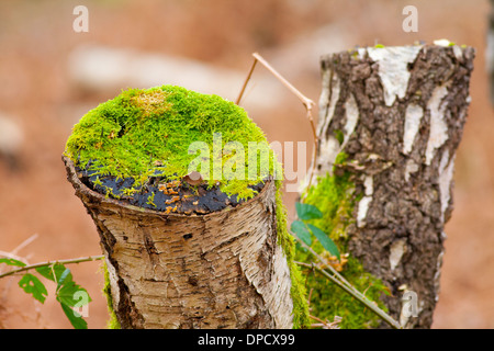 Moss on Tree Stump - Stock Photo