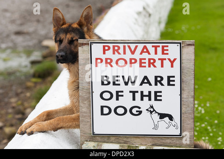 A guard dog with his eyes closed stands next to a sign warning of the guard dog. This is not good security. - Stock Photo