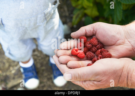 Grandfather sharing raspberries with grandson - Stock Photo