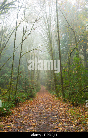 Walkway through forest - Stock Photo