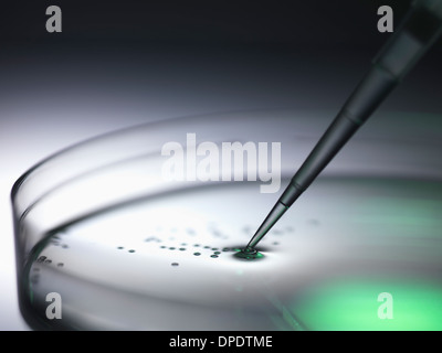 Pipetting samples into petri dish used in dna, stem cell, biomedical, biotechnology and pharma research - Stock Photo