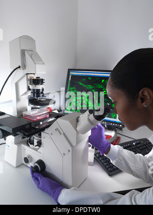 Female researcher using inverted microscope to view stem cells displayed showing fluorescent labeled cells - Stock Photo
