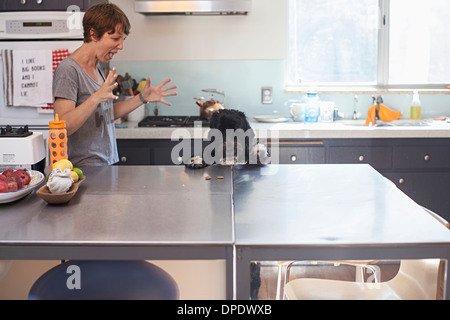 Naughty pet dog standing up at kitchen counter - Stock Photo