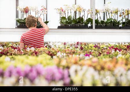 Mature woman tending plants in plant nursery - Stock Photo