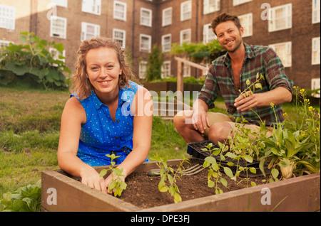 Couple planting vegetables on council estate allotment - Stock Photo