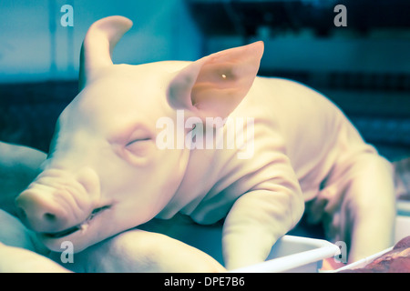 Whole dead pig for sale on the market. - Stock Photo