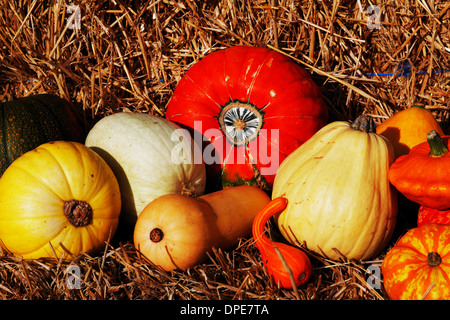 Composition of pumpkins and summer and winter squashes - Stock Photo