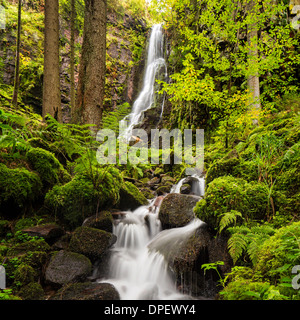 Waterfall in the forest, Burgbach waterfall near Schapbach, Black Forest, Baden-Württemberg, Germany - Stock Photo