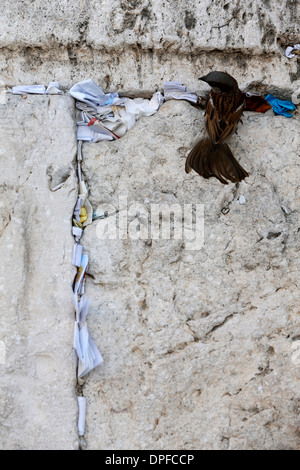 Prayer requests in crack of the Western Wall, Jerusalem, Israel, Middle East - Stock Photo