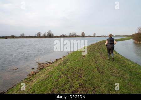 A woman walking along a raised embankment next to flooded fields in Cambridgeshire UK - Stock Photo