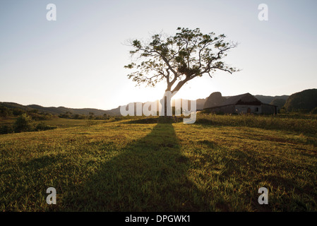 Sun setting behind tree in rural landscape - Stock Photo