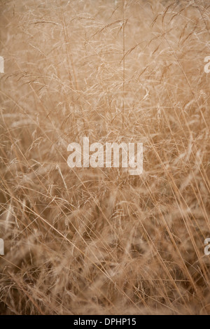 Dry wild grass in late summer. - Stock Photo