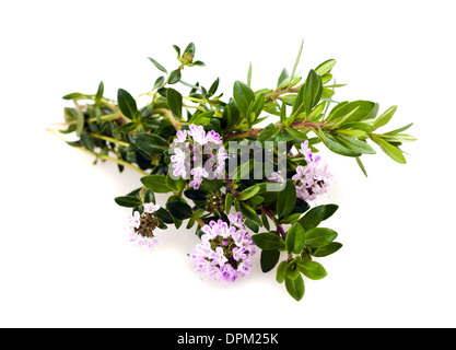 Savory flowers isolated on white - Stock Photo