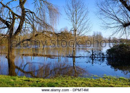 River Avon floods Churchill Gardens, Salisbury, Wiltshire, England, UK - Stock Photo