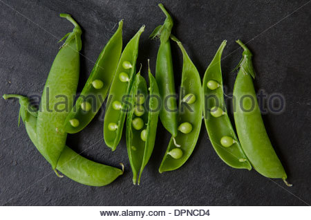 Bunch of garden fresh pea pods slightly opened to show peas inside on dark background. - Stock Photo