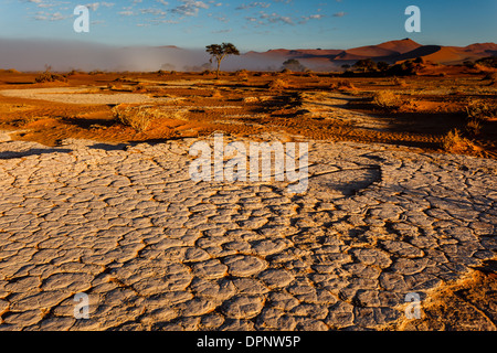 As sun rises mist dissipates and dry cracked oasis river mud displays pattern in desert sand. - Stock Photo