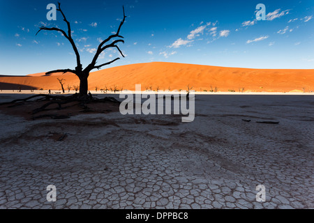 Bright sunrise illuminated parts of red sand dune while cracked dry river bed mud of desert floor oasis remains - Stock Photo
