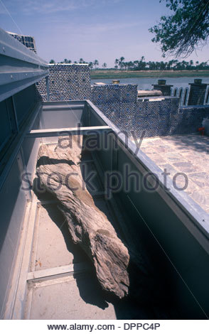 Holy Adam Tree Qurna or Qurnah, ( Al-Qurnah ) southern Iraq HOMER SYKES - Stock Photo