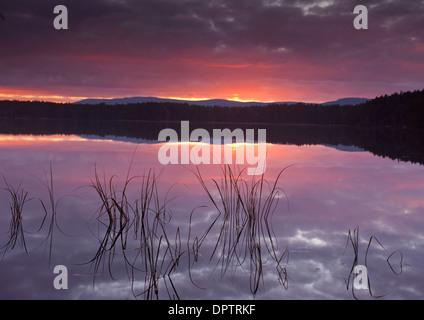 Sunset after sundown at Loch Garten, Nethybridge, Strathspey. Inverness-shire. Scotland  SCO 9216 - Stock Photo