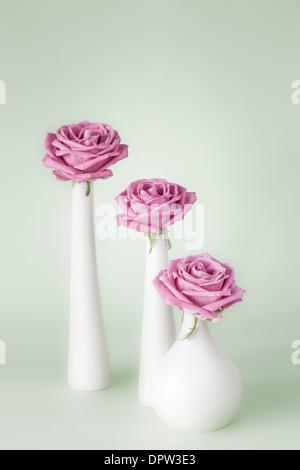 Three pink roses - Stock Photo