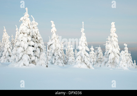 Winter landscape on the Acker, Harz National Park, Germany, - Stock Photo