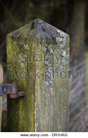 Old gate post. - Stock Photo