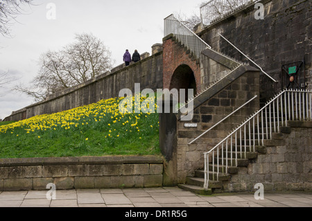 Access point where steps lead up to ancient city walls where 2 people walk by spring daffodils on embankment below - Stock Photo
