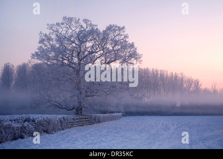 An oak tree growing in a hedge stands out through the snow and mist in the corner of a field near Defford after - Stock Photo