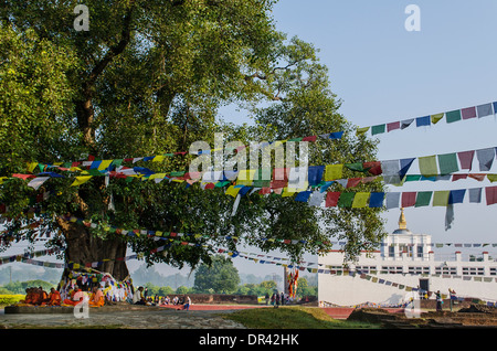 Monks sitting in front of the Bodhi Tree - Stock Photo