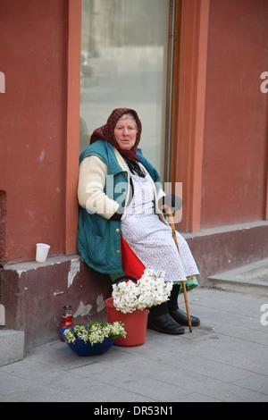 Old woman selling flowers, Sibiu (Hermannstadt),  Transylvania, Romania, Europe - Stock Photo