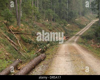 forestry / Forstwirtschaft - Stock Photo