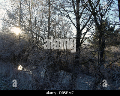 Winter landscape with trees / Winterlandschaft mit Bäumen - Stock Photo