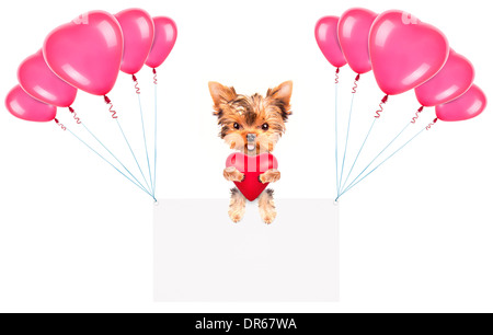 Holiday banner with balloons and valentine puppy dog holding red heart - Stock Photo