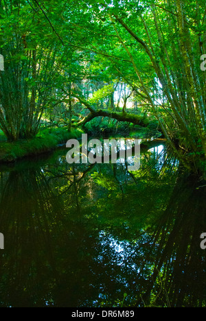 Fallen tree reflected on surface of water - Stock Photo