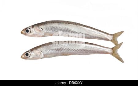 fresh smelts fish isolated on white background - Stock Photo