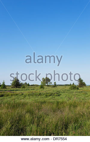 Belgium, Wallonia, High Fens - Eifel Nature Park, hill moor - Stock Photo