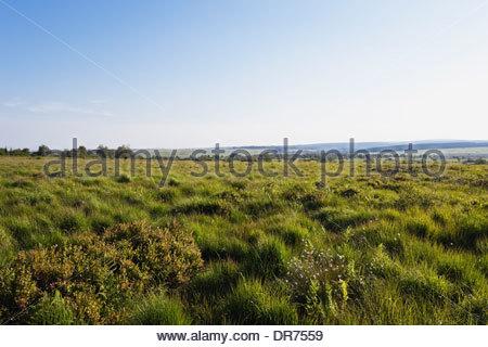 Belgium, Wallonia, High Fens - Eifel Nature Park, hill moor - Stock Photo