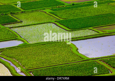 Taro fields in Hanalei Valley, Kauai, Hawaii, USA - Stock Photo